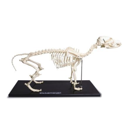 Skelett Hund detalj kopia plast 60x30cm