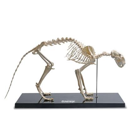 Skelett Katt detalj kopia plast 60x30cm
